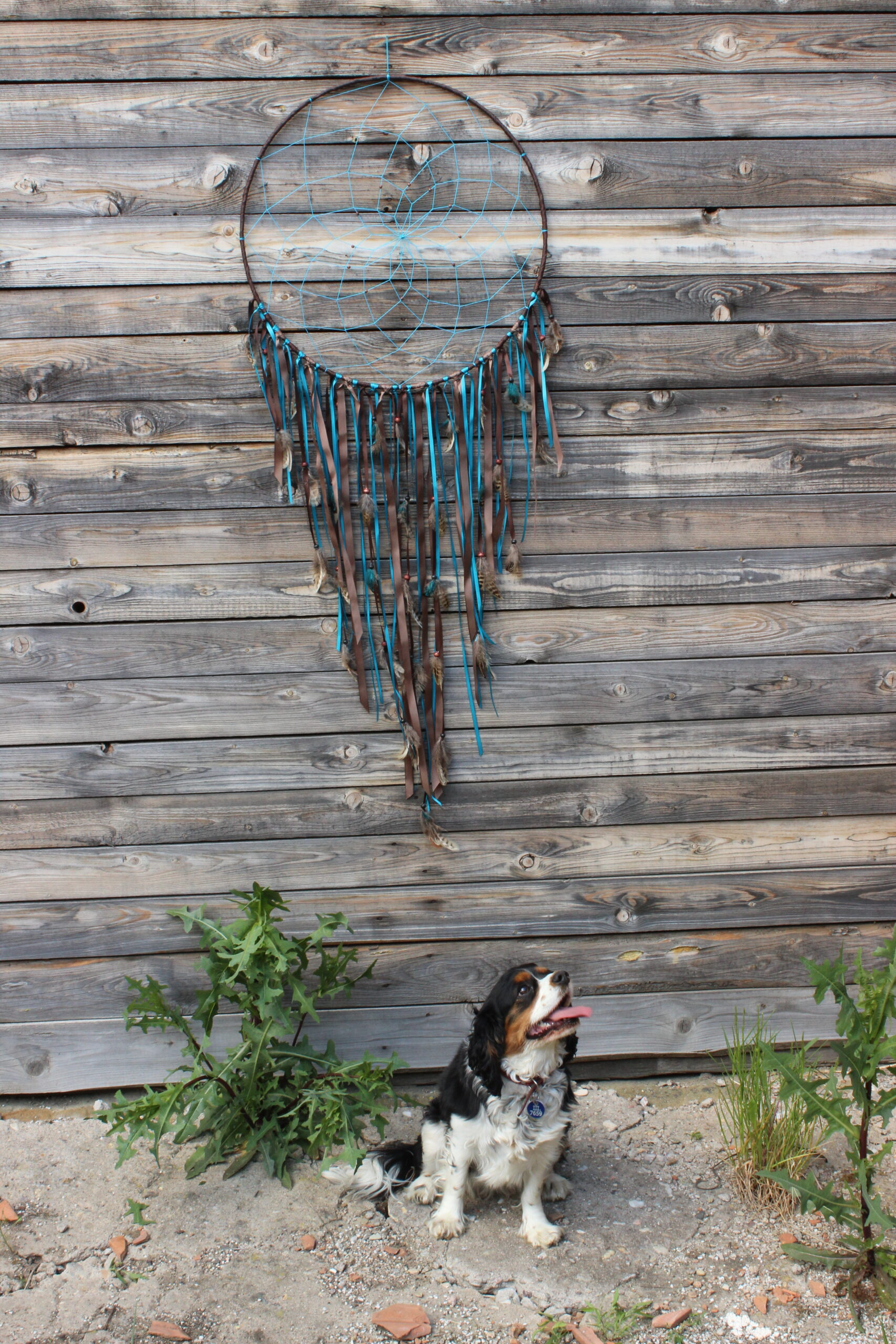 Obrovský tyrkysovo-hnědý lapač snů od JB tvorba zavěšený na dřevěném pozadí se sedícím psem